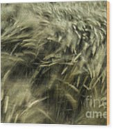 Sea Of Barley  Wood Print