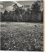 Sea Of Dandelion - Bw Wood Print