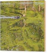 Sea Of Green Square Wood Print