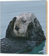 Sea Otter Grooming Wood Print