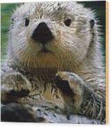 Sea Otter Swimming At Tacoma Zoo Captive Wood Print