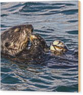 Sea Otter With Clam 2 Wood Print