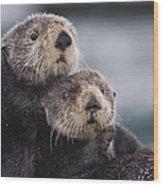 Sea Otters Huddled Together Wood Print