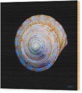 Sea Shell 3 Wood Print
