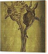 Sea Shell 1 Wood Print