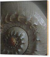 Sea Shell Joy Wood Print