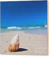 Sea Shell On The Beach Wood Print