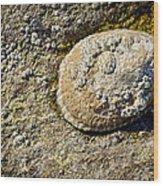 Sea Shell Rock Wood Print