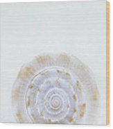 Sea Shell Wood Print