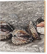 Sea Shells 2 Wood Print