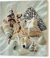 Sea Shells- Colorful Collection Wood Print