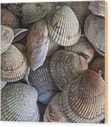 Sea Shells Wood Print by Jeff Swanson