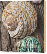 Sea Shells With Urchin  Wood Print
