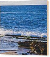 Sea Shelves Wood Print