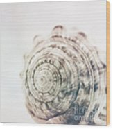 Sea Side Trinkets Wood Print