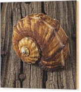 Sea Snail Shell On Old Wood Wood Print by Garry Gay
