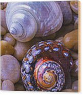 Sea Snail Shells Wood Print