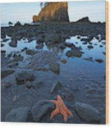 Sea Stacks And Star Fish Wood Print