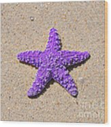 Sea Star - Purple Wood Print by Al Powell Photography USA