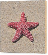 Sea Star - Red Wood Print