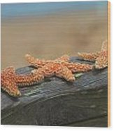 Sea Star Trio Wood Print