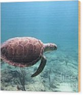 Sea Turtle 5 Wood Print
