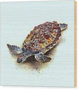 Sea Turtle II Wood Print