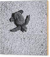 Sea Turtle In Black And White Wood Print