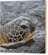Sea Turtle Puako Tidepools Wood Print
