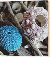 Sea Urchin Duo Wood Print