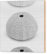 Sea Urchins Black And White Vertical Wood Print
