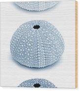 Sea Urchins Blues Vertical Wood Print