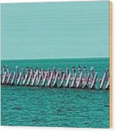 Seabird Lineup Wood Print