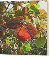 Seagrape Leaves Wood Print