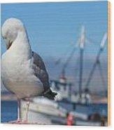 Seagull 3 Wood Print
