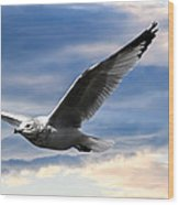 Seagull And Clock Tower Wood Print by Bob Orsillo