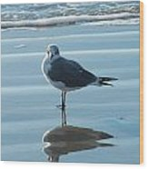 Seagull At Attention Wood Print