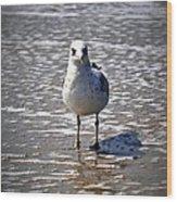 Seagull At Low Tide Wood Print