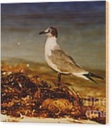 Seagull At The Keys Wood Print