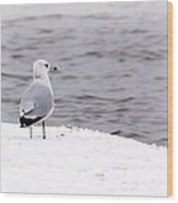Seagull At The Lake In Winter Wood Print