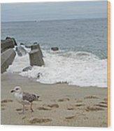Seagull At The Sea Wood Print