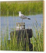 Seagull At Weeks Landing Wood Print by Bill Cannon