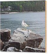 Seagull Awaits Wood Print