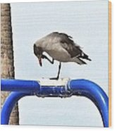 Seagull Balancing Act Wood Print