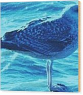 Seagull Basking In The Sun Wood Print
