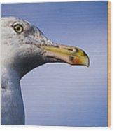 Seagull - Cape Neddick - Maine Wood Print
