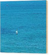 Seagull Cruising Over Azure Blue Sea Wood Print
