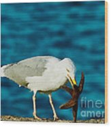 Seagull Dancing With A Star Wood Print