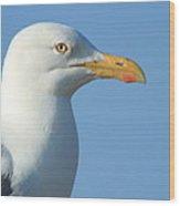 Seagull  Wood Print by Diane Rada