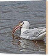 Seagull Eating Huge Fish In Water Art Prints Wood Print